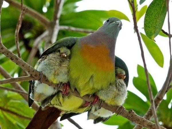 Birds under Wings