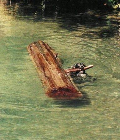 Dog Log Water