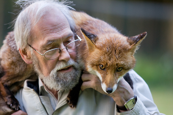 Mike Towler with rescued red fox