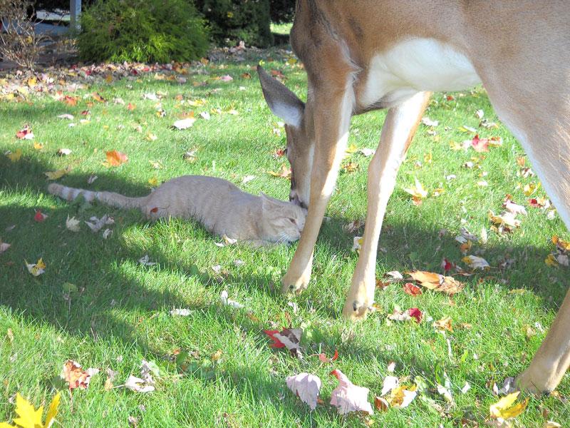 Cat & Deer Friends