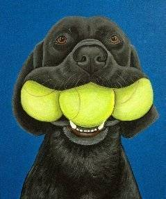 Dog with mouth full of tennis balls
