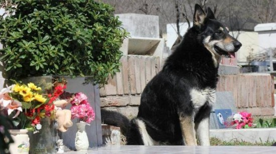 dog sits at grave for six years