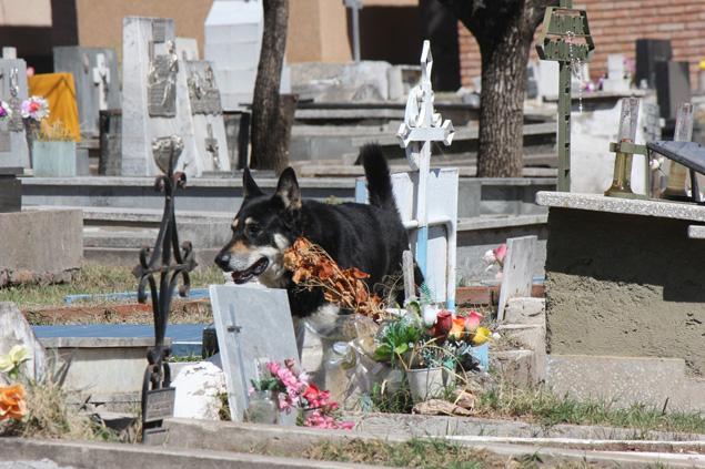 El Capitan Dog Cemetery
