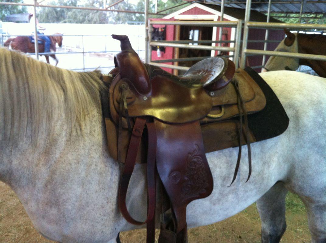 Saddle on Horse