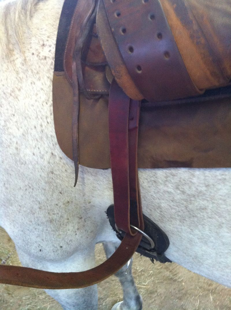 strapping a saddle to horse