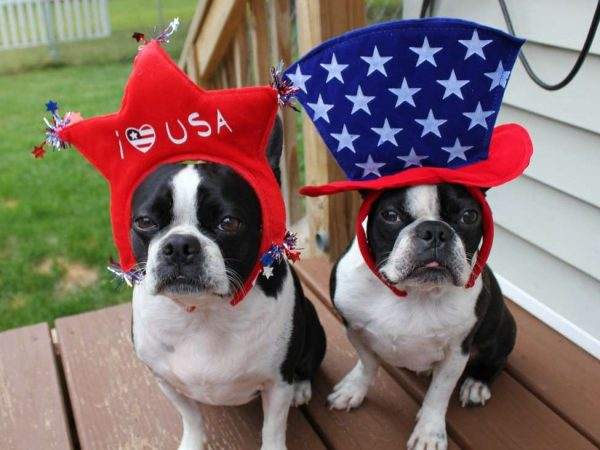 Dogs July 4