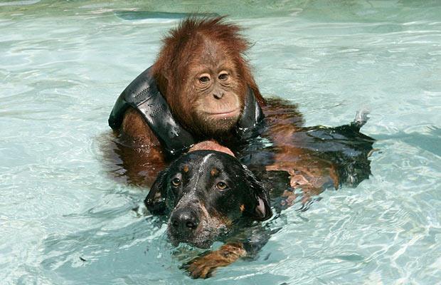 Dog Monkey Swimming