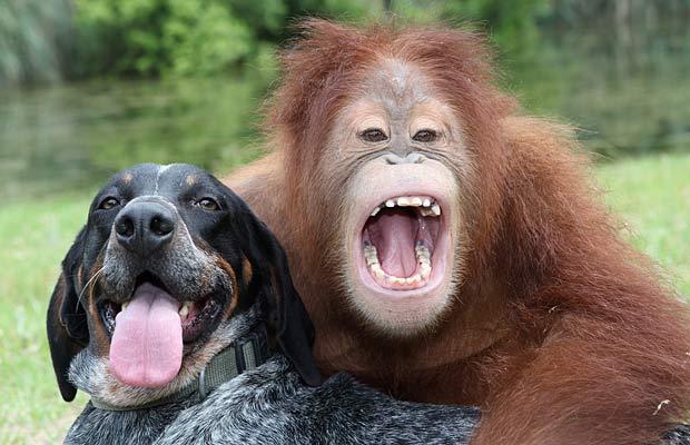 Monkey & Dog Friends