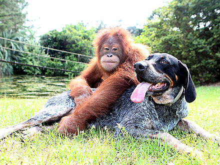 Suryia and Roscoe Friends