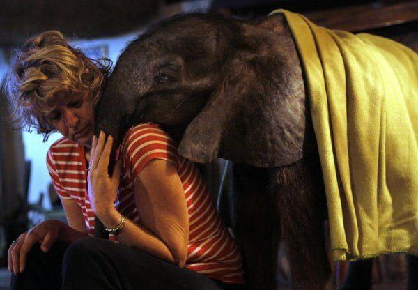 Baby Moses Elephant