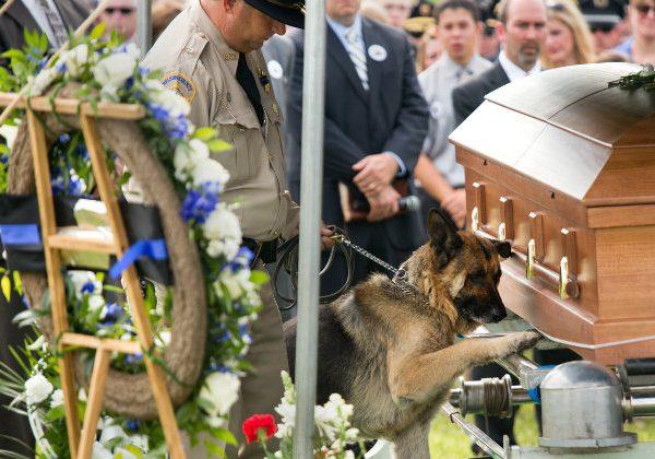Police dog mourns
