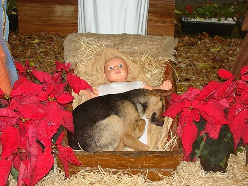 Dog in Nativity Scene