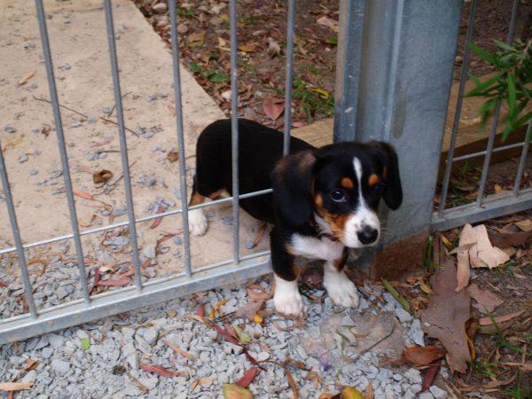 Puppy stuck in gate