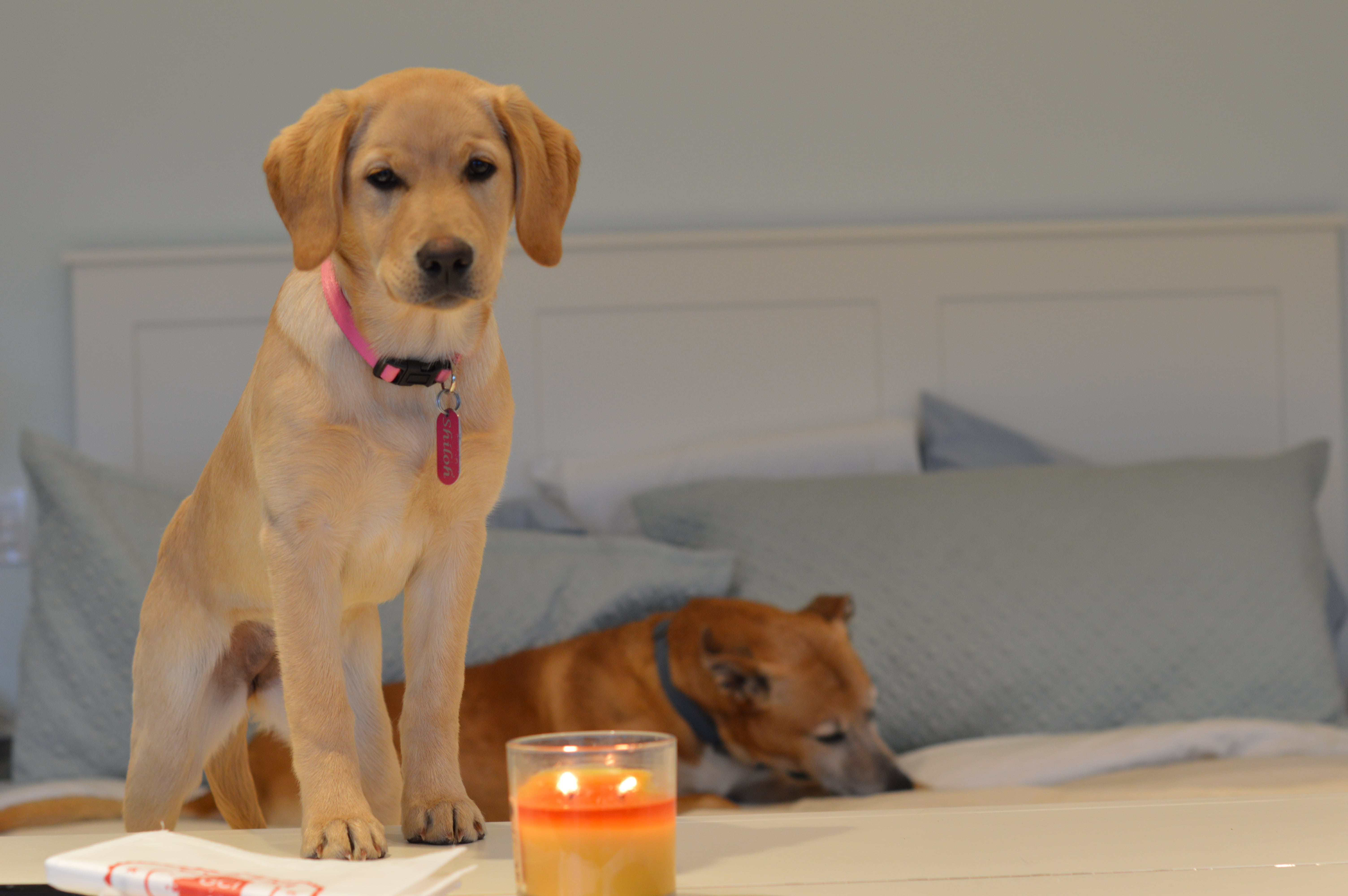 Shiloh and Clyde w candle