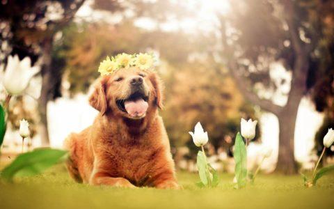 Spring Dog Flower