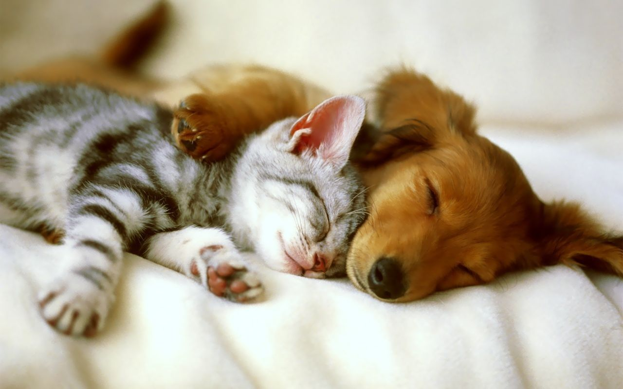 Puppy Hugging Kitten