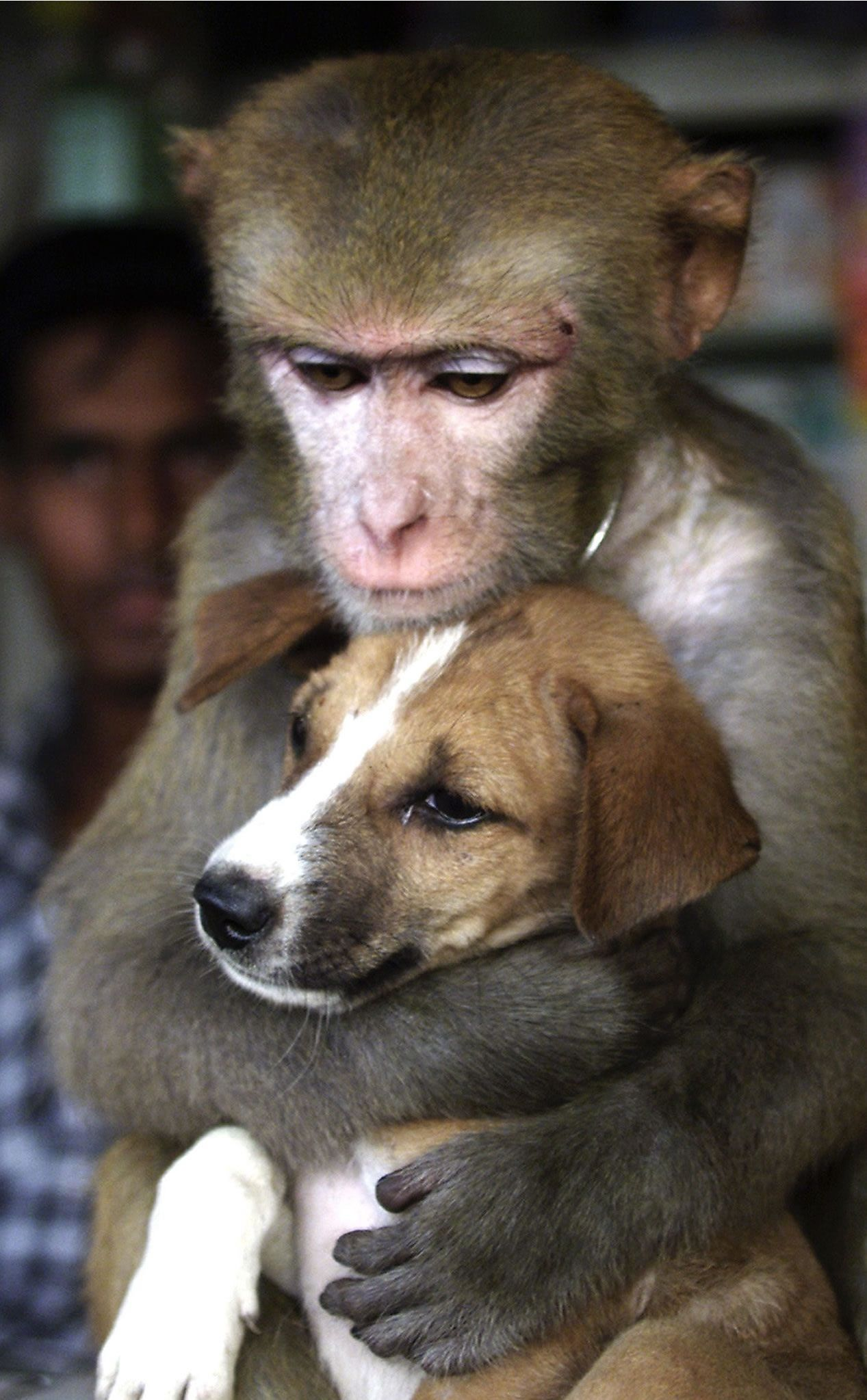 Monkey Hugging Dog