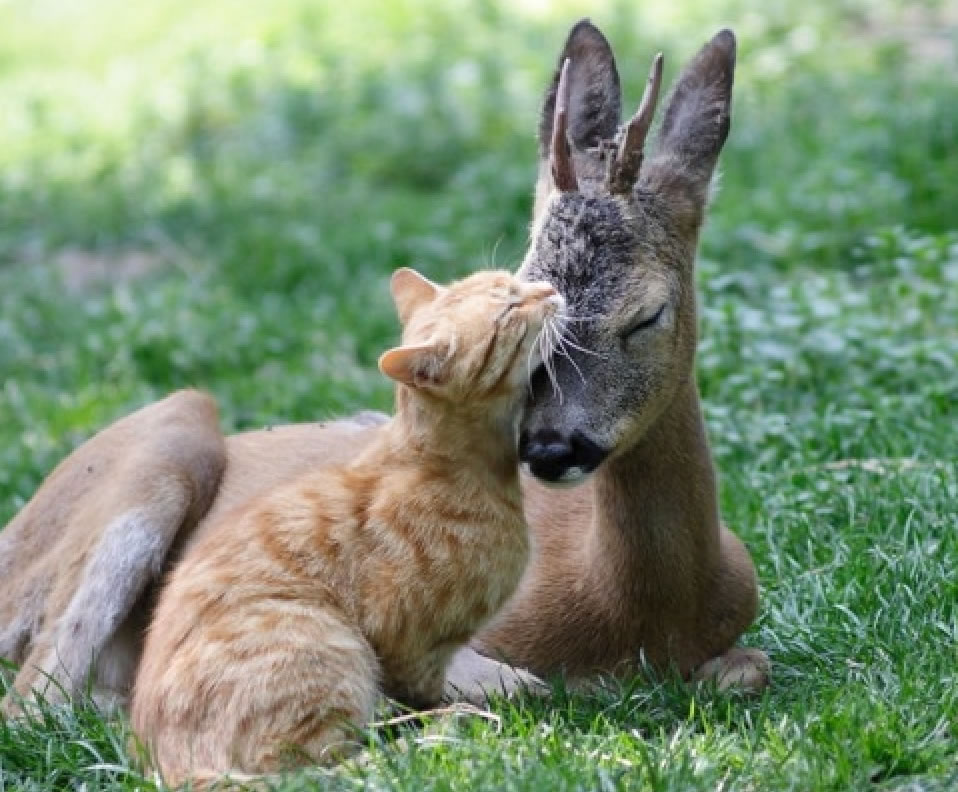 Cat and Fawn