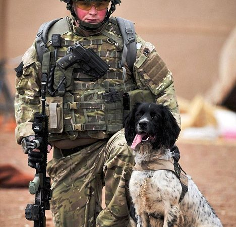 Theo the Bomb Sniffing Dog