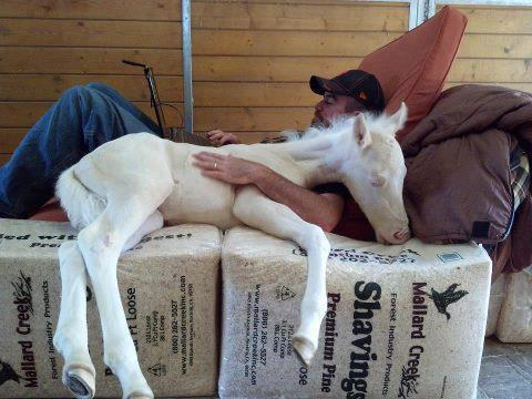 man lying with pony in arms