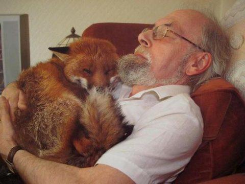 Cropper the Fox