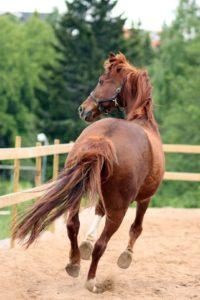 Ginger Horse