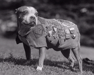 Sgt. Stubby War Dog Hero!