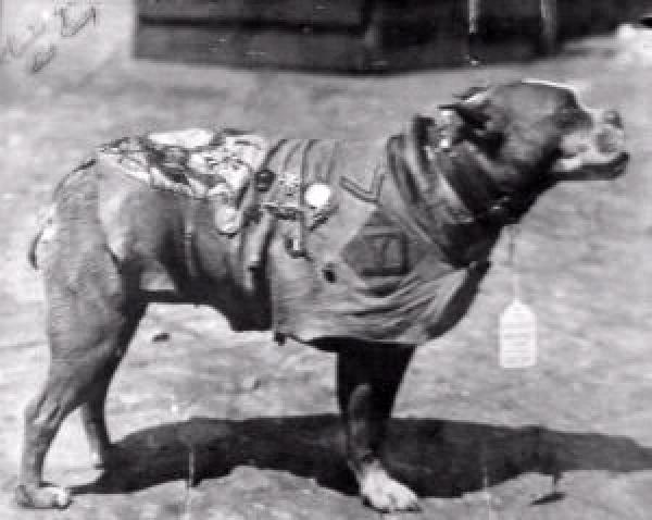 America's first war dog