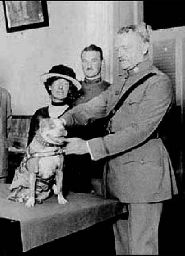 sergeant stubby dog