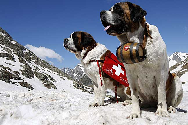 St. Bernard Life Saving Work