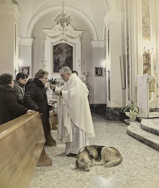 Tommy the Altar Dog