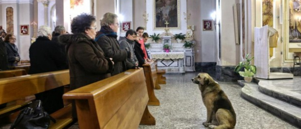 Dog Church Italy