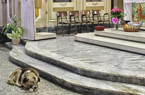 dog sleeping by altar
